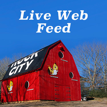 live web-feed babyen