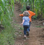 children running in a corn maze